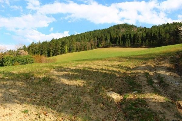 Rocca San Casciano (Fc): i percorsi della Margherita