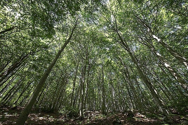 alberi Appennino
