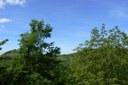 Natura e verde